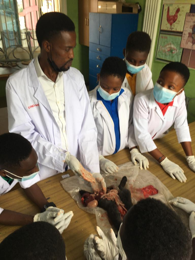 Students dissect a rabbit during science practical